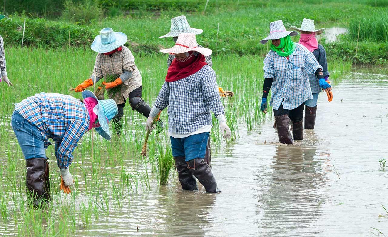 better-rice-initiative-asia-bria