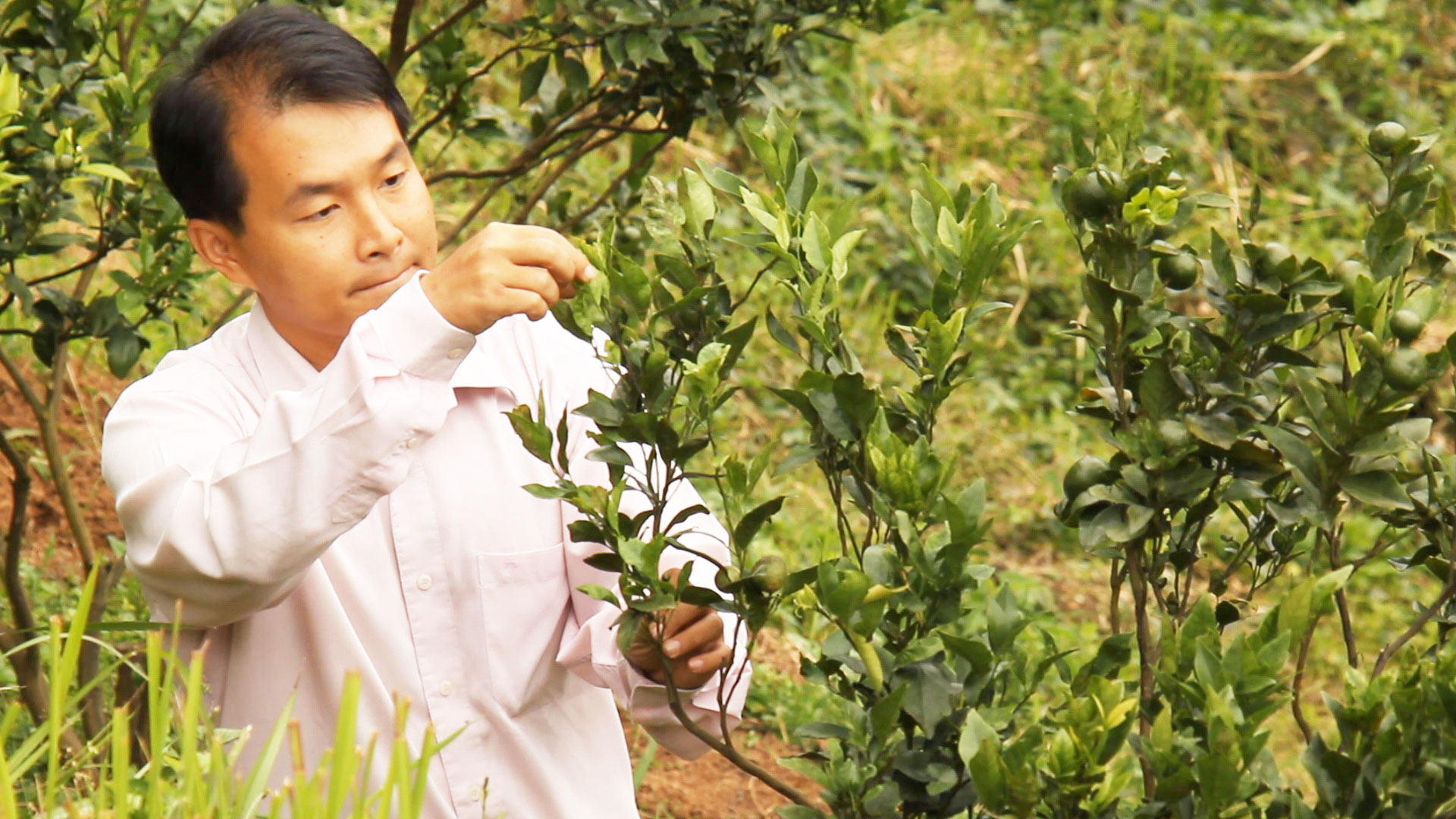 Agribusiness model: 'No green agriculture, no agro-eco tourism'