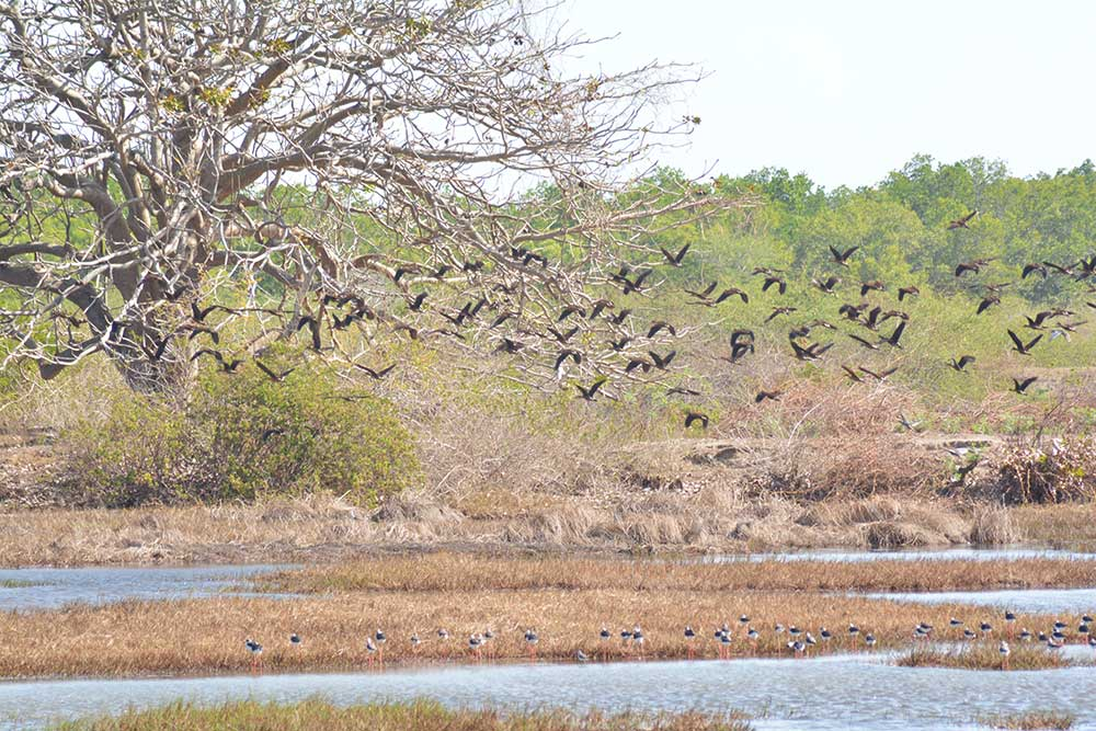 A flock of the Philippine duck and shore birds found in one of the municipalities covered by the NOCWCA.