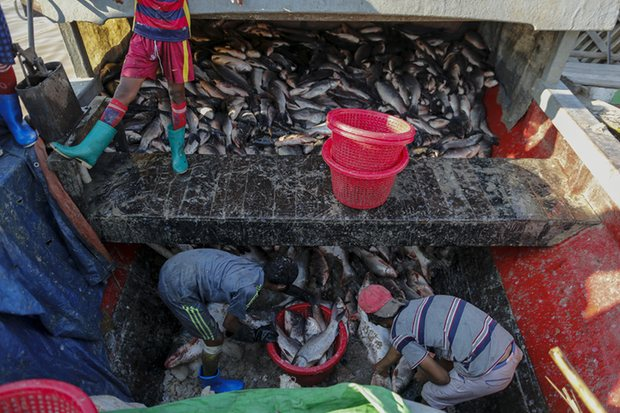 Children unload fish from a boat at San Pya fish market in Yangon, Myanmar. The opening up of the economy has triggered a demand for child labour. Photograph: Soe Zeya Tun/Reuters