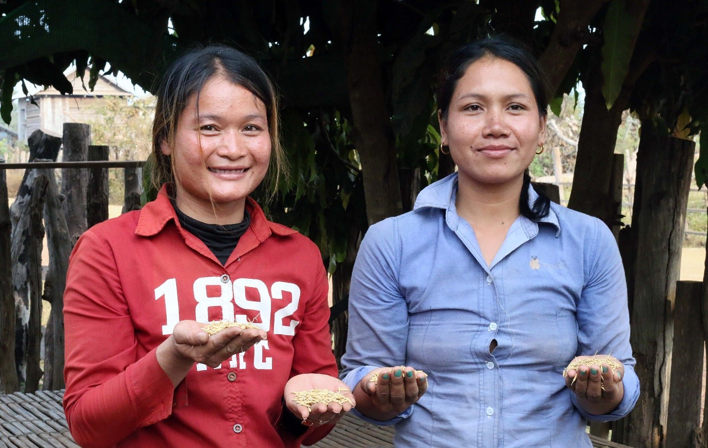 Smallholder farmers in Cambodia successfully field-test a stress tolerant variety to adapt to climate change