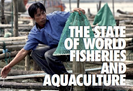 "Global analysis on fisheries and aquaculture and their contribution to meeting the related SDG targets in this new book ""The State of World Fisheries and Aquaculture"""